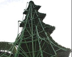 елка конусная вид изнутри